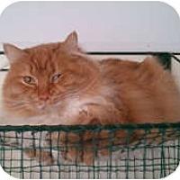 Adopt A Pet :: Fantasia - Anchorage, AK
