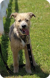 Terrier (Unknown Type, Medium) Mix Dog for adoption in Greenville, Georgia - Chanel