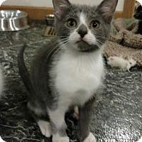 Adopt A Pet :: Quasar - Fairborn, OH