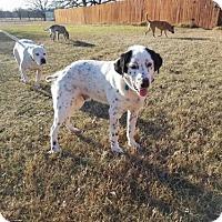 Adopt A Pet :: Jingles - Fort Collins, CO