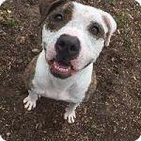 Adopt A Pet :: Persimmon - Louisville, KY