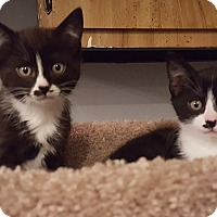 Adopt A Pet :: Holly & Simon - Mount Clemens, MI