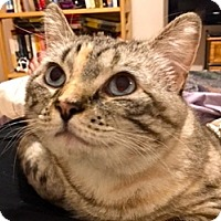 Adopt A Pet :: Celina AKA CC - LaJolla, CA