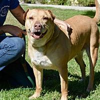 Adopt A Pet :: Brook - Santa Barbara, CA