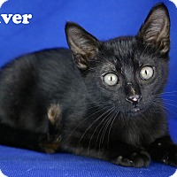 Adopt A Pet :: Oliver - Carencro, LA