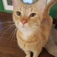 Adopt A Pet :: KC - Aberdeen, SD