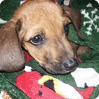 Adopt A Pet :: Sonnie - Billerica, MA