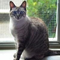 Adopt A Pet :: Missy - Baton Rouge, LA