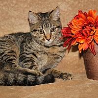 Adopt A Pet :: Justina (Spayed) - Marietta, OH