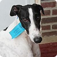 Adopt A Pet :: Carlos - Philadelphia, PA