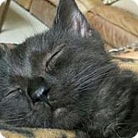 Adopt A Pet :: Pepper - Grand Rapids, MI
