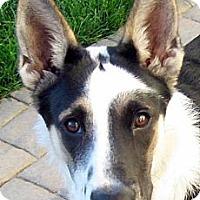Adopt A Pet :: Jessie - Oakley, CA