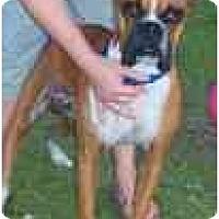 Adopt A Pet :: Remington - Thomasville, GA