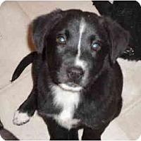 Adopt A Pet :: Hailee - Washington, NC