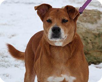 Shepherd (Unknown Type) Mix Dog for adoption in Elyria, Ohio - Layla