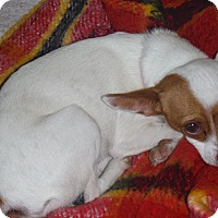Adopt A Pet :: Marco and Polo - Arenas Valley, NM