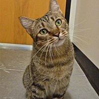 Adopt A Pet :: Lucas - Capshaw, AL