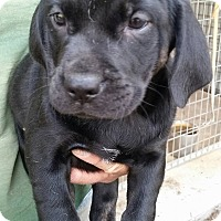 Adopt A Pet :: Fawn - Gainesville, FL
