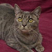 Adopt A Pet :: Jasmine - Chattanooga, TN