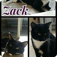 Adopt A Pet :: Zack (Adoption Pending) - Crown Point, IN