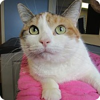 Adopt A Pet :: Agatha - Northfield, MN