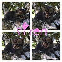 Adopt A Pet :: Siren - Garden City, MI