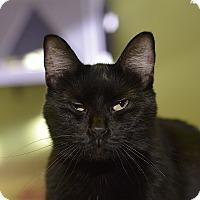 Adopt A Pet :: Morgan - Medina, OH