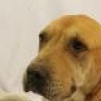 Adopt A Pet :: Meili - Huachuca City, AZ
