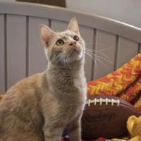 Adopt A Pet :: Jefferey - Williamsport, PA