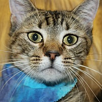 Adopt A Pet :: WEST - Clayton, NJ