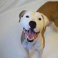 Pit Bull Terrier Dog for adoption in Atlanta, Georgia - MOLLY