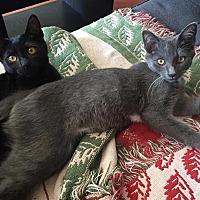 Adopt A Pet :: Casper & Slater - Los Angeles, CA