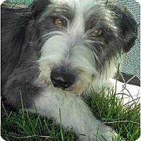 Adopt A Pet :: Rose - Glenrock, WY