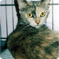 Adopt A Pet :: Lotus - Medway, MA