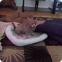 Adopt A Pet :: Romeo - Orlando, FL