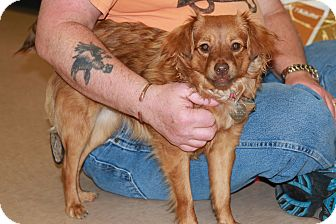 Terrier (Unknown Type, Medium) Mix Dog for adoption in Rochester, Minnesota - Sage (Julia)