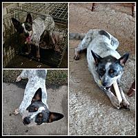 Adopt A Pet :: Bessie - LANSING, MI