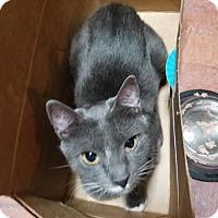 Adopt A Pet :: Myra - Walla Walla, WA