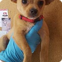 Adopt A Pet :: BooBoo - Chico, CA