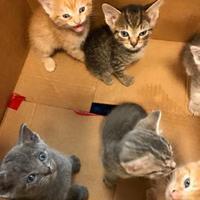 Adopt A Pet :: 500 HIghland Village - Mesquite, TX