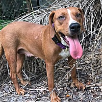 Adopt A Pet :: Sammy - Ft. Myers, FL