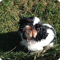 Adopt A Pet :: Penelopy - Cumberland, MD