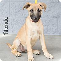 Adopt A Pet :: RHONDA - Modesto, CA