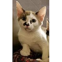 Adopt A Pet :: DEVON - Diamond Bar, CA