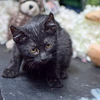 Adopt A Pet :: Fleetwood - Boise, ID