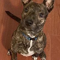 Adopt A Pet :: Baxter - Durham, NC