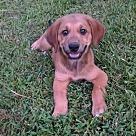 Adopt A Pet :: Filip