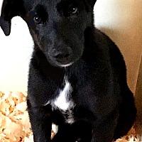 Adopt A Pet :: HUDSON(HURRICANE HARVEY PUP! - Wakefield, RI