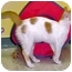 Photo 2 - Domestic Shorthair Cat for adoption in HARRISONVILLE, Missouri - HUEY