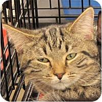 Adopt A Pet :: Charlie - Harrisburg, NC